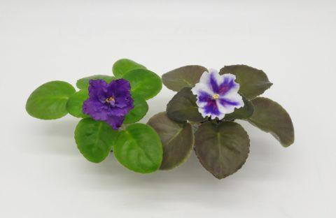 Малыши цветут!
